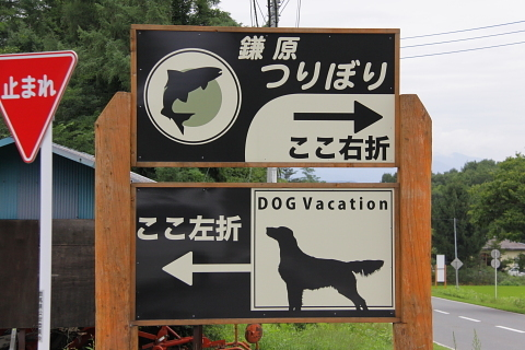 0813f0105dogvacation_480