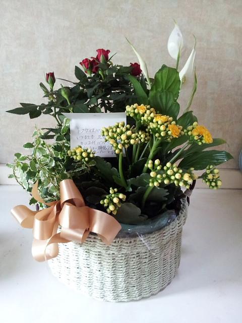 2614s114941flowers_480