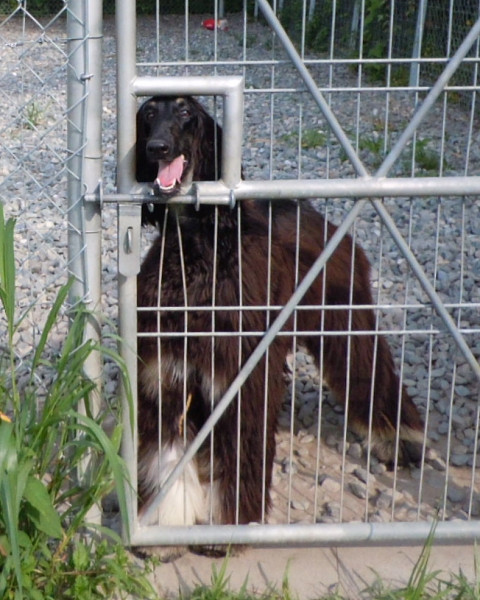 2627c0737kennel_480