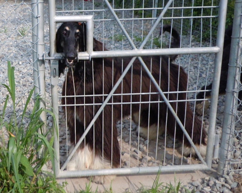 2627c0738kennel_480