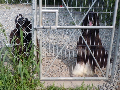 2627c0739kennel_480