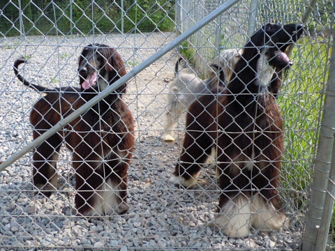2627c0742kennel_480