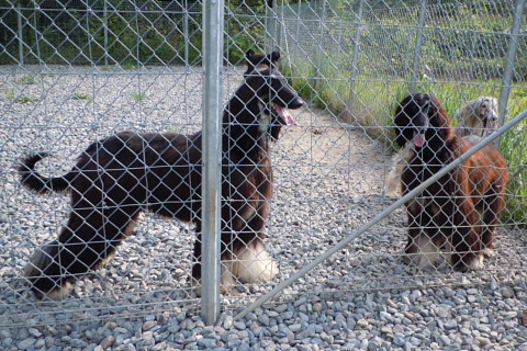 2627c0747kennel_480