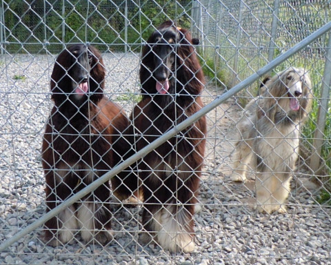 2627c0752kennel_480