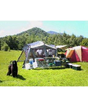 トラ  初キャンプ