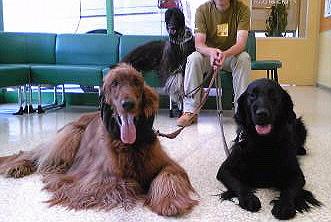 動物病院の待合室でぇす